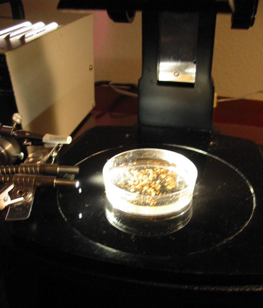 Petri dish on dissecting microscope base