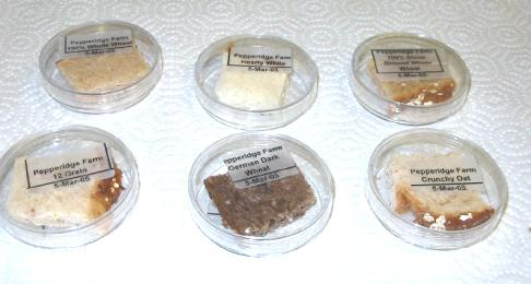 Specimens in Petri Dishes