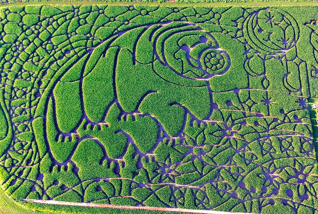 Tardigrade Corn Maze